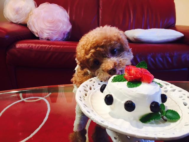 愛犬の誕生日